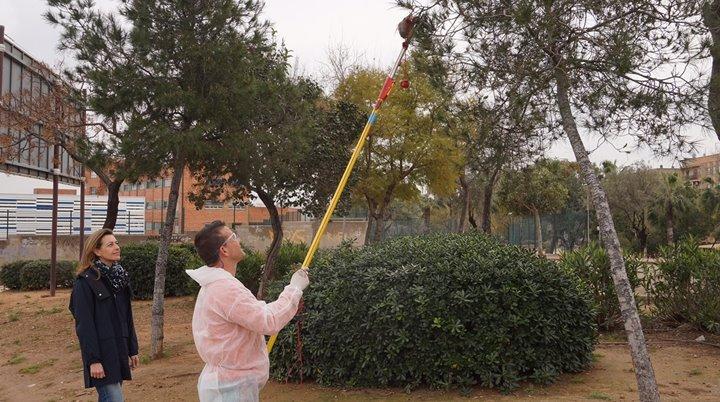 Paterna realiza campaña de pinos tratados