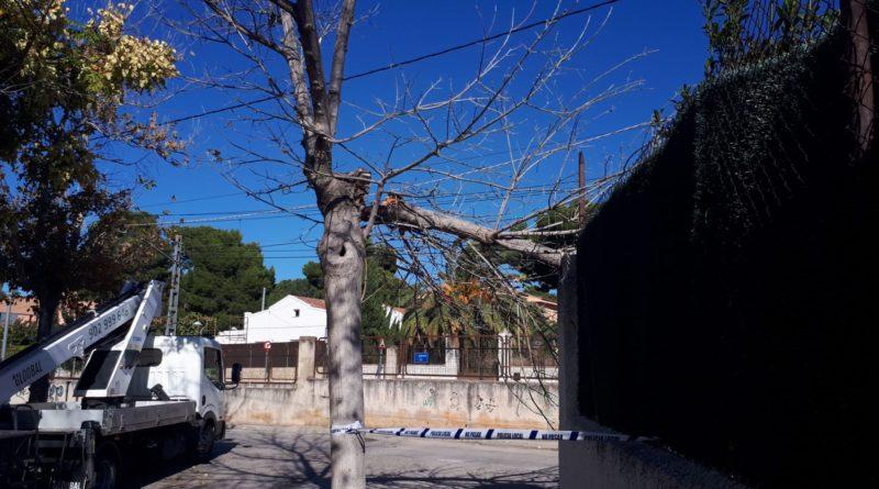 El intenso aire ha provocado la caída de ramas en la calle 17 de La Canyada